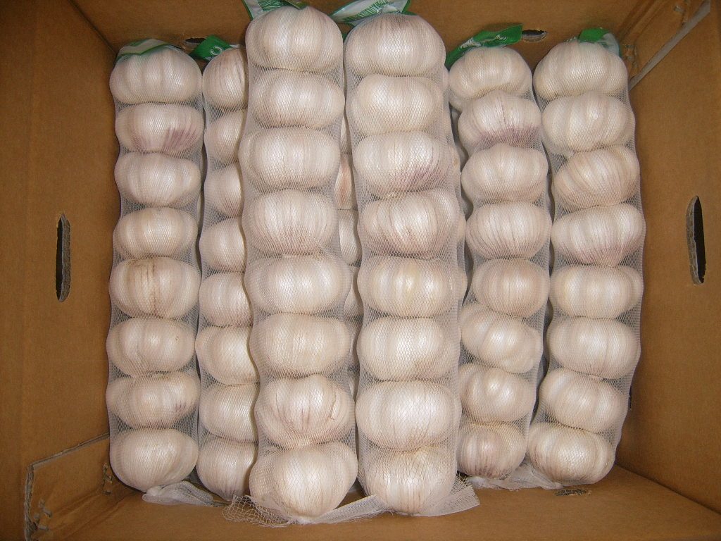normal white garlic-Chinese Garlic Sale Center